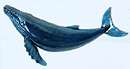 "12"" Humpback Whale Wall Sculpture #B"